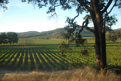 Potter Valley vineyard, Oct 2010