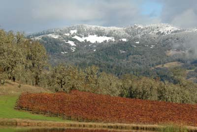 Fall in a Potter Valley vineyard, 2010